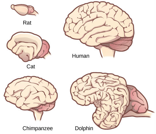 Alcohol is not a human brain cleaner phil cain mammal brains ccuart Choice Image